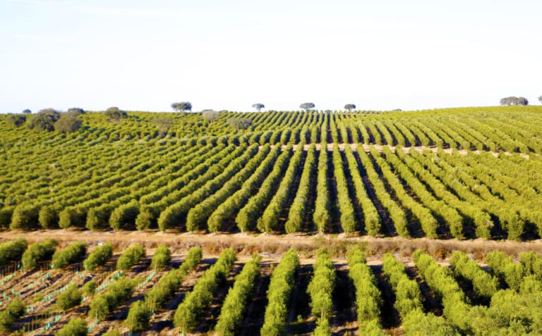 ISQ e EDIA promovem economia circular na zona do Alqueva