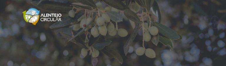 Boas práticas de Economia Circular na fileira do azeite