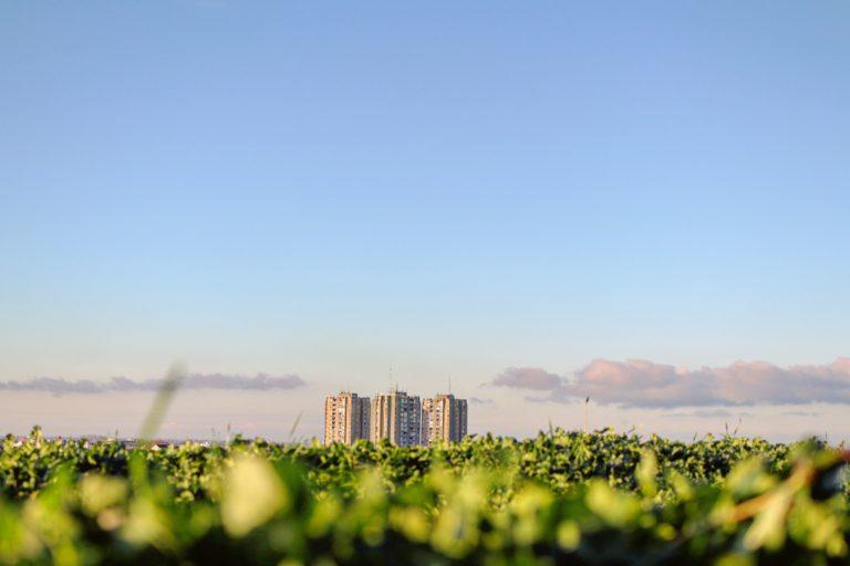 ISQ desenvolve soluções para obter produtos mais sustentáveis e rentáveis