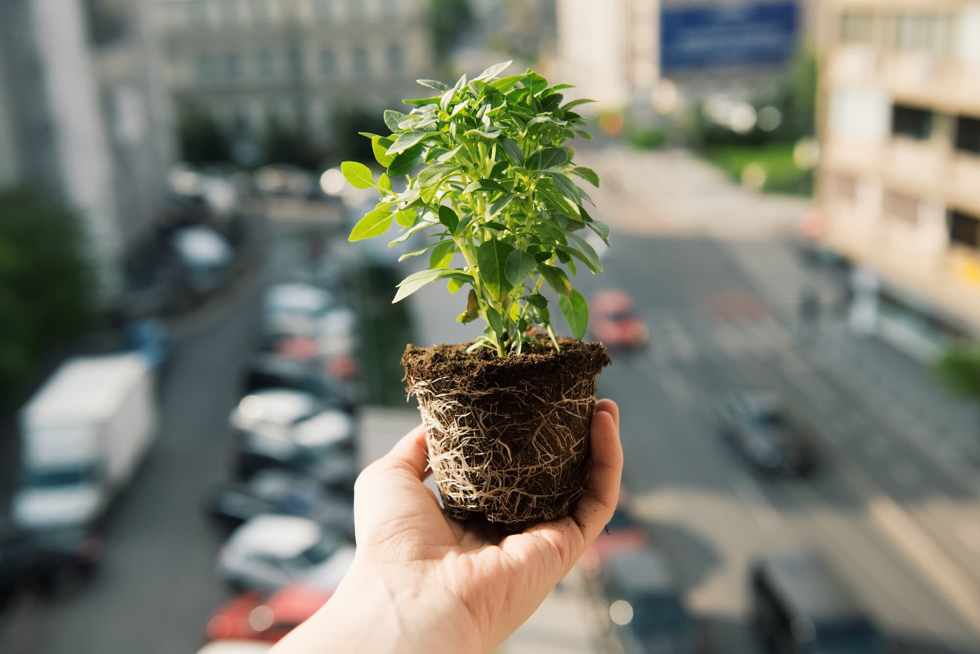 Hand holding green plant with roots and soil over a city background