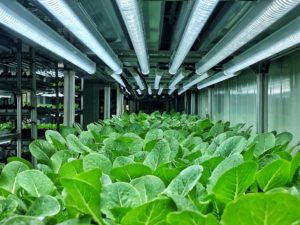 Sustainable Green Agriculture