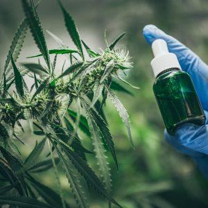 CBD hemp oil, Hand holding bottle of Cannabis oil against Marijuana plant.